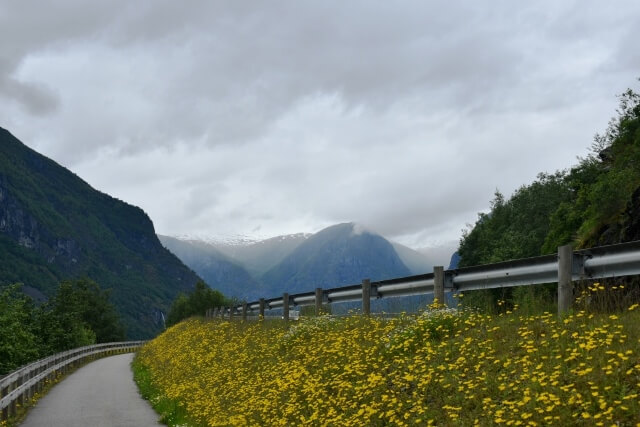 wildflowers along path while travelling in Norway