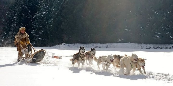 dog sledding activity holiday in Sweden