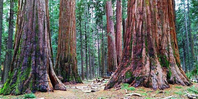 Sequoia National Park in California road trip